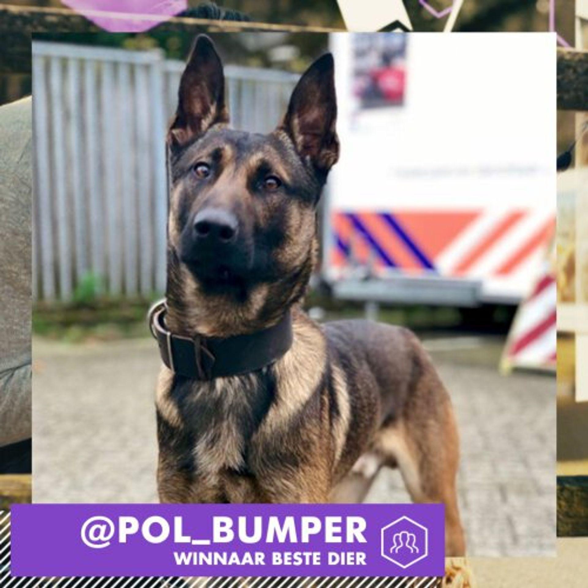 Politiehond Bumper wint Social Media prijs!