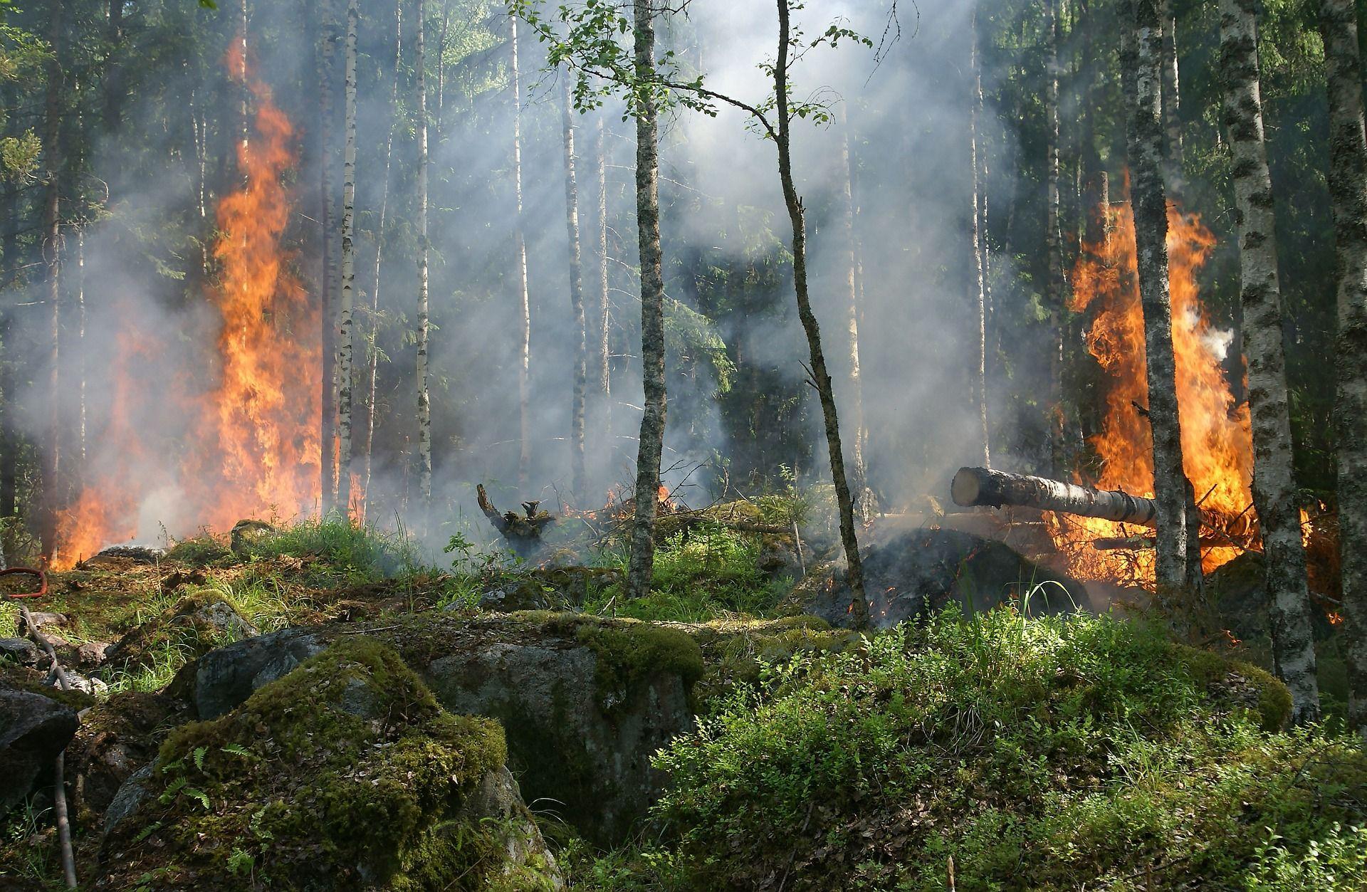 Helga van Leur vertelt waar bosbranden vandaan komen