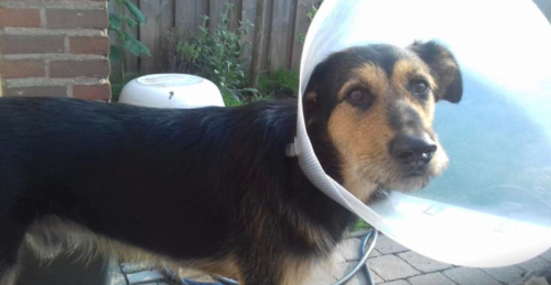 Het Vriendenteam bewijst hondje Bica en Eline een enorme Vriendendienst!