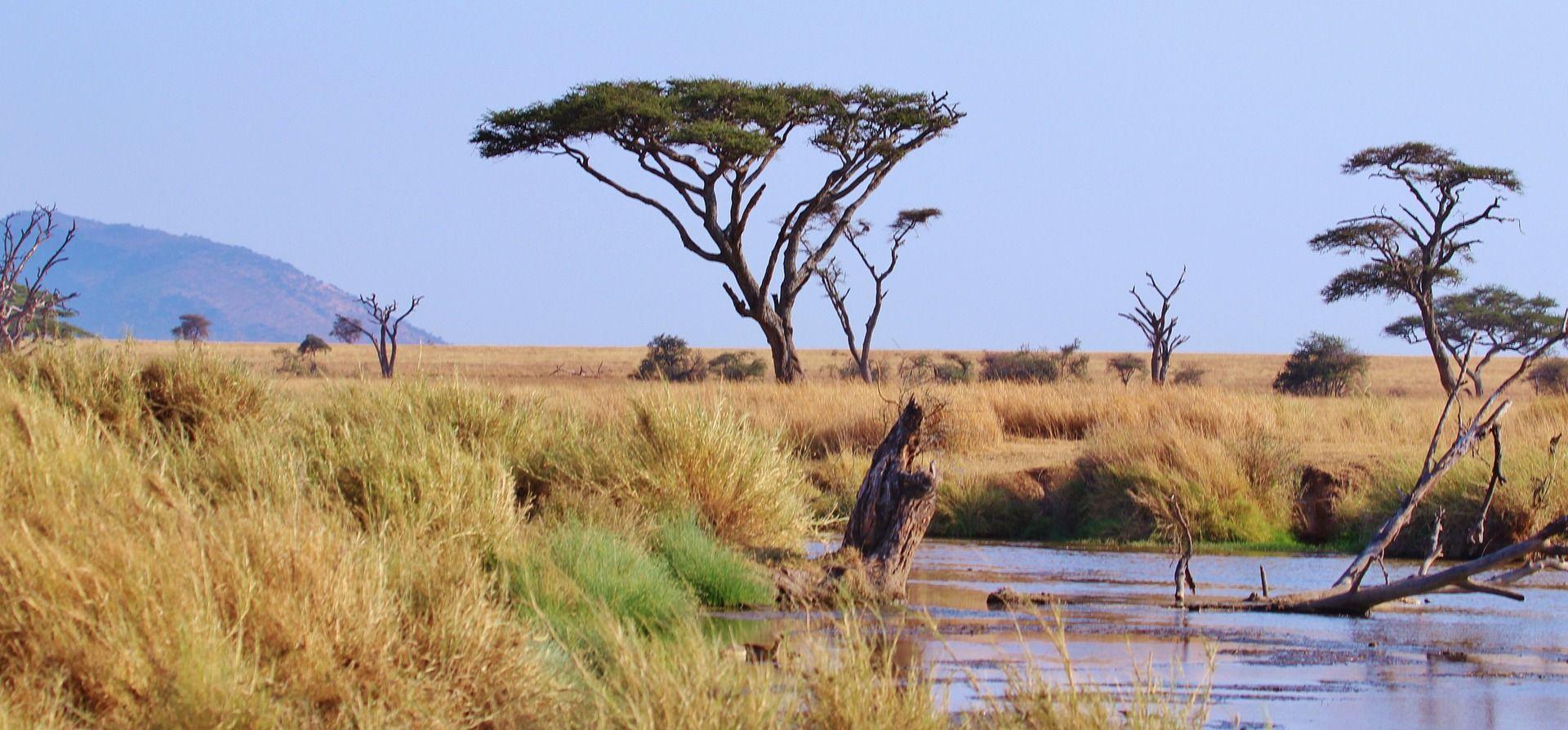 Saskia sliep tussen de wilde dieren in Tanzania #Backpacktrack