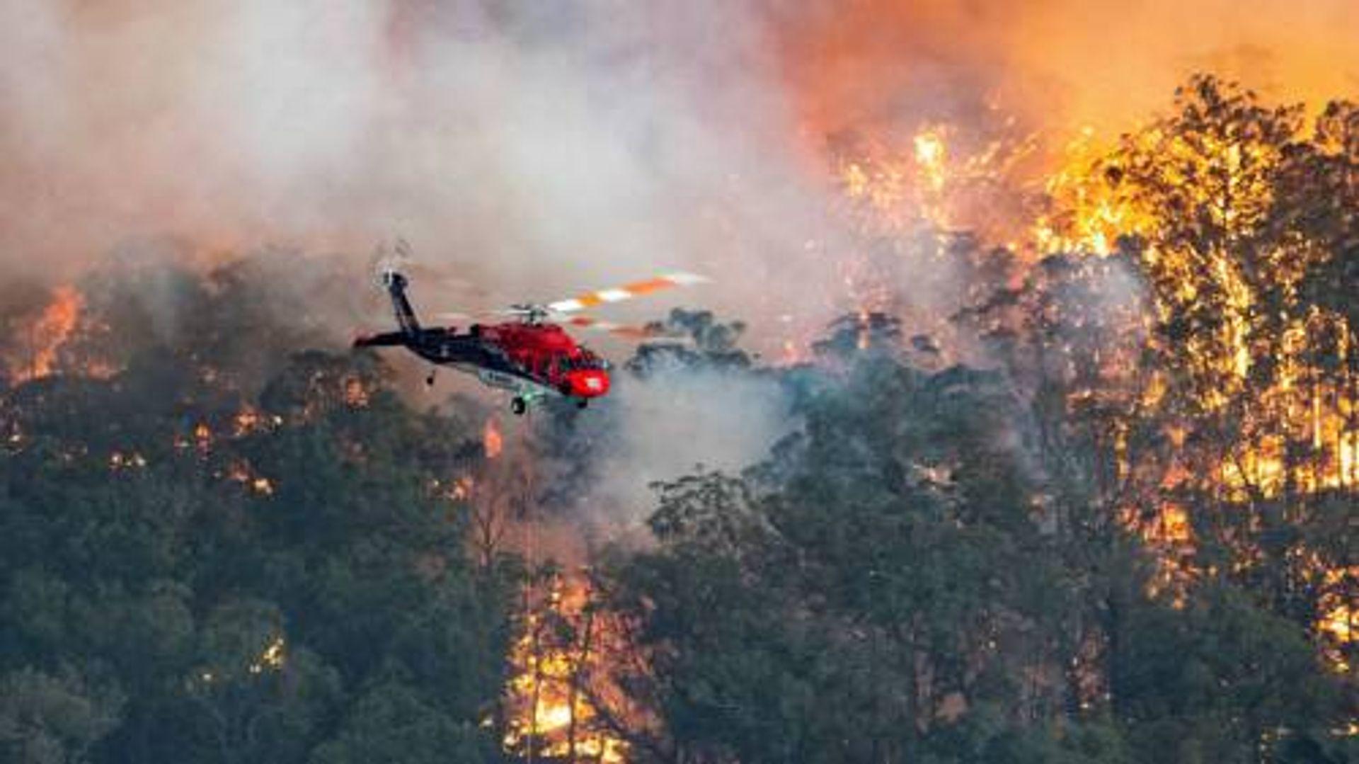 Hoe zijn de bosbranden in Australië zo uit de hand gelopen?...