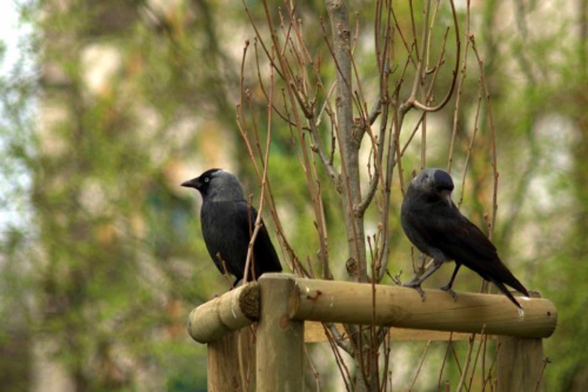 Minder vogels in de stad: