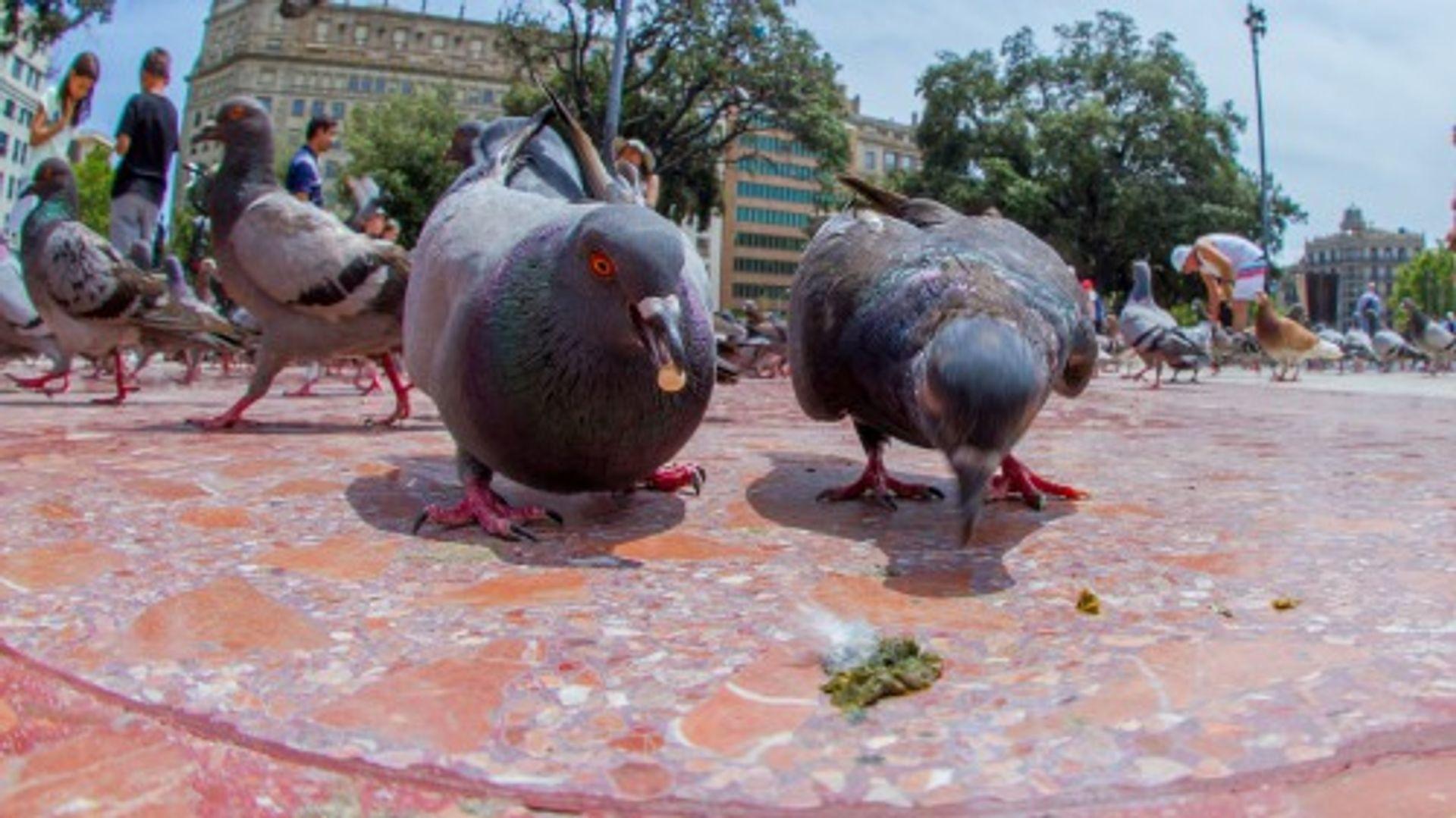 Haat op duiven?!