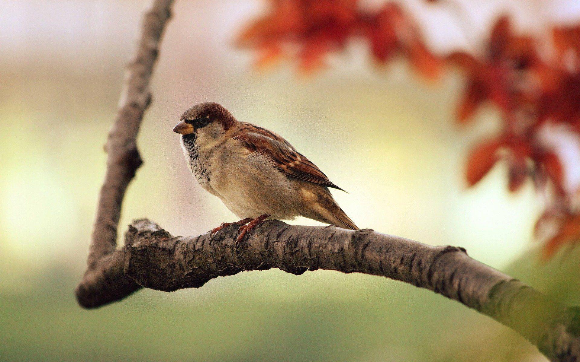 Weekendtip: je kunt komend weekend weer tuinvogels tellen