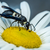 Lekkere Track: Benjamin Britten - The Wasp