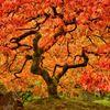 Gedicht: Herfstproeve, van Yang Mu