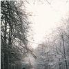 Kerstkwesties met Beatrijs Ritsema: Ik ben alleen met Kerst, wat nu?