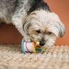 Mooi Moment: Bepaald geen hondenweer