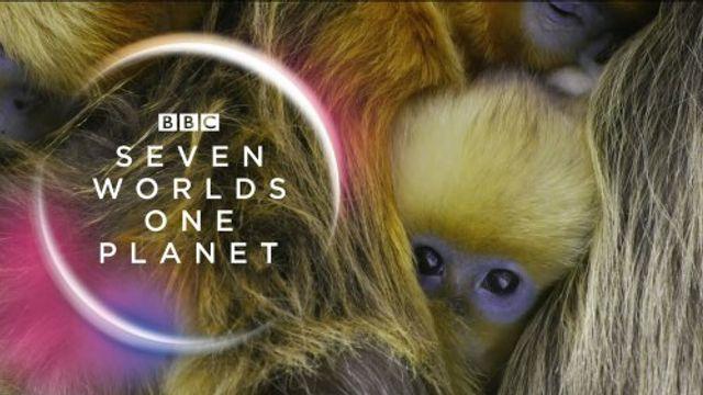Cameraman Michael J. Sanderson over epische nieuwe natuurserie BBC 'Seven Worlds, One Planet'