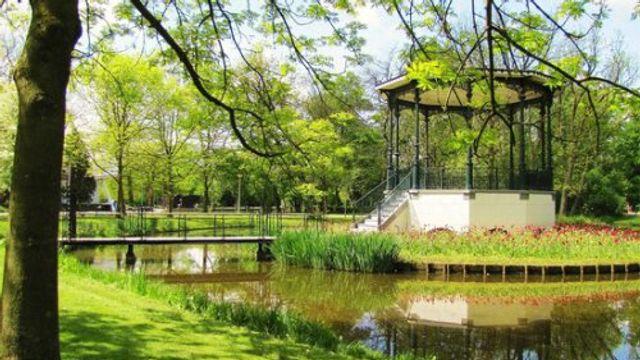 Gedicht: Ode aan een boom in het Vondelpark, van Vasalis