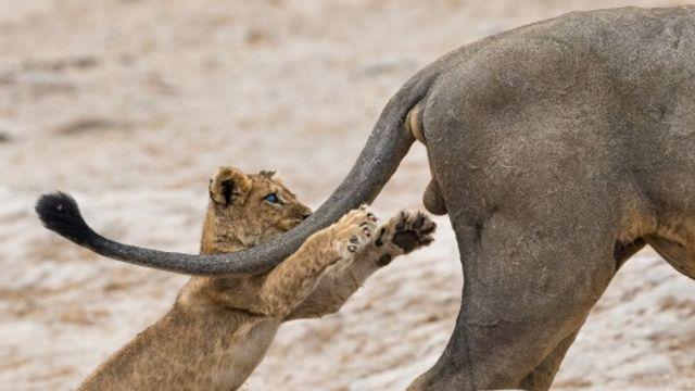 Museumtip: Comedy Wildlife Photography Awards