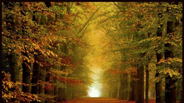 Hollandsche Nieuwe! It's still autumn van Rembrandt Frerichs Trio & Kayhan Kalhor (4)