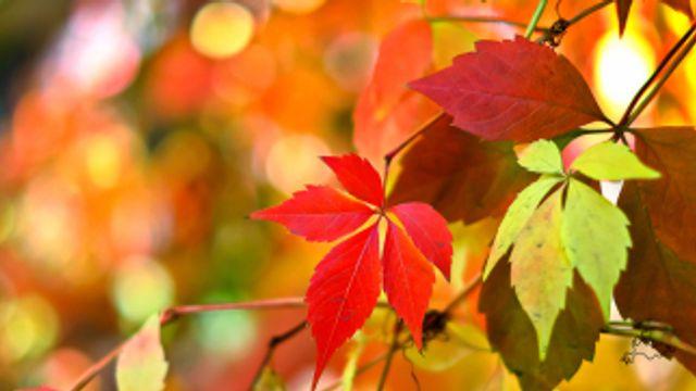 Gedicht: Herfst is de tijd van vermoeden, van Edna St. Vincent Millay