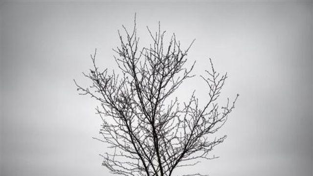 Bomen hebben last van de droogte