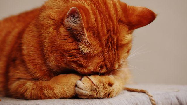 """Luisteraar Nicky: """"Mijn poes Boef is de eerste transgender kat van Nederland"""""""