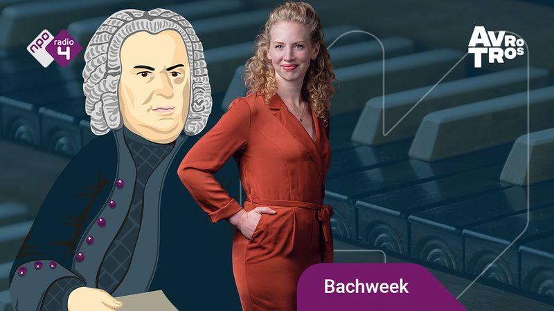 Bachweek - DMF - carine